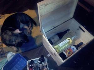 A Wachhund fb